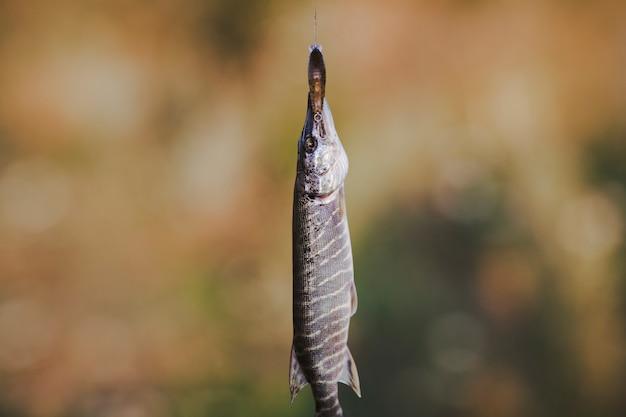 Nahaufnahme von frischem fisch auf defocused hintergrund