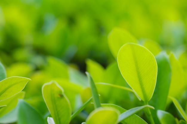 Nahaufnahme von frischen blättern auf grüner natur