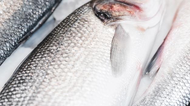 Nahaufnahme von frischen fischen im markt