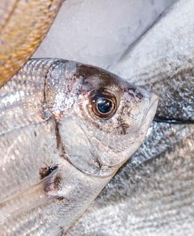 Nahaufnahme von frischen fischen im shop