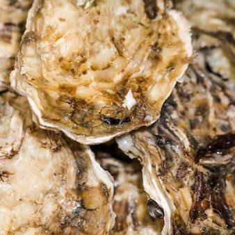Nahaufnahme von frischen meeresfrüchten