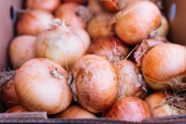 Nahaufnahme von frischen organischen zwiebeln
