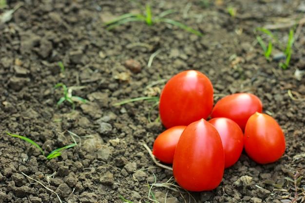 Nahaufnahme von frischen, reifen tomaten auf bodenhintergrund