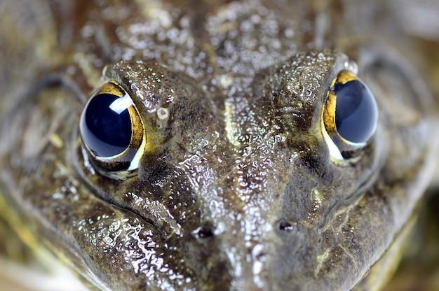 Nahaufnahme von frosch