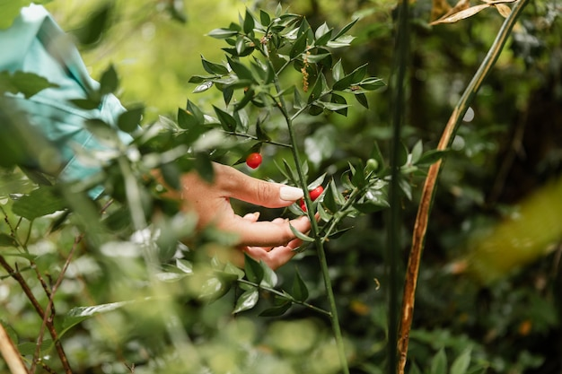 Nahaufnahme von früchten im wald
