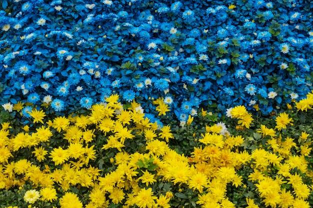 Nahaufnahme von gelben und blauen blumen in einem garten