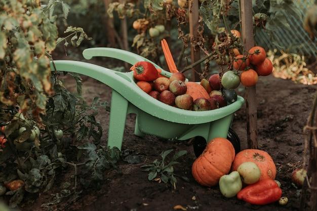 Nahaufnahme von gemüse und obst, das in der gartenschubkarre liegt ernte von kürbissen äpfeln tomaten