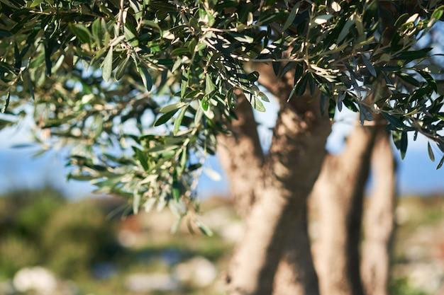 Nahaufnahme von grünblättern und -meer auf einer unscharfen natur