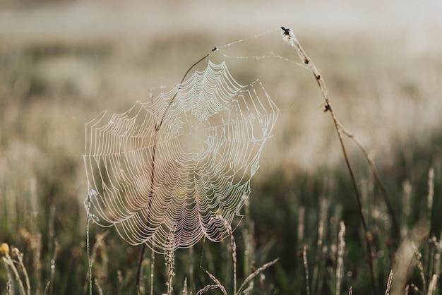 Nahaufnahme von grünem frischem gras auf einem feld mit morgentautropfen mit einem spinnennetz
