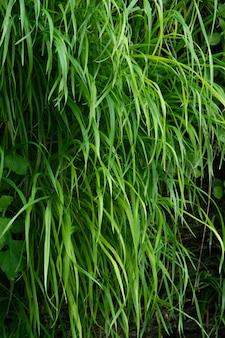 Nahaufnahme von grünem gras hintergrund üppige vegetation wand