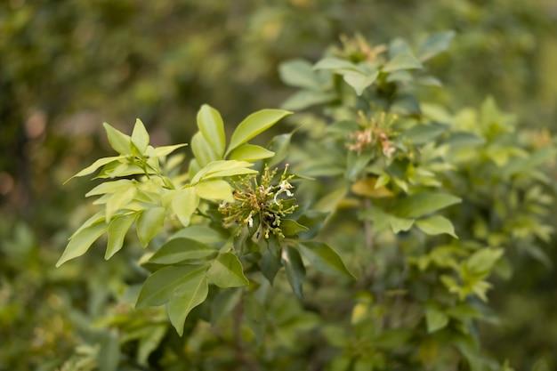 Nahaufnahme von grünen blättern, die am sonnigen tag auf dem baum wachsen.
