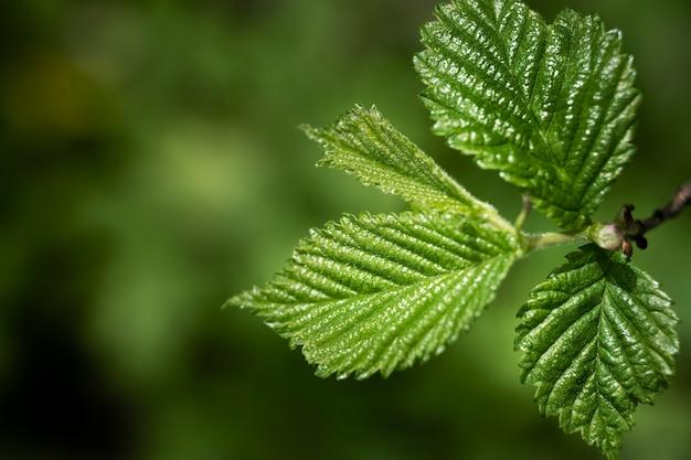 Nahaufnahme von grünen blättern in der natur