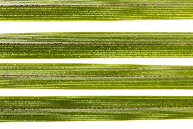 Nahaufnahme von grünen blättern