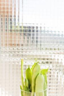 Nahaufnahme von grünen hyazinthenbohnen im behälter