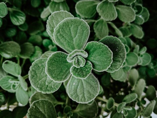 Nahaufnahme von grünen pflanzen in einem mit tautropfen bedeckten garten