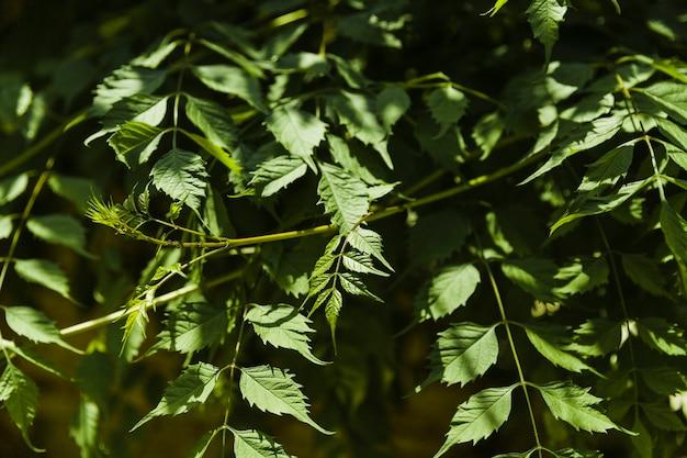 Nahaufnahme von grünen zweigen