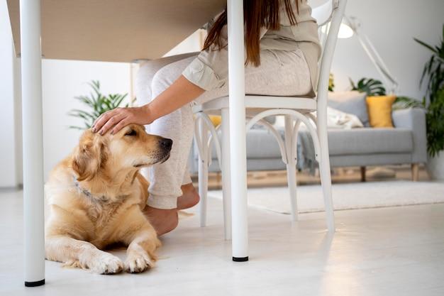 Nahaufnahme von handstreichelhund