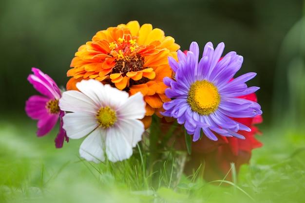 Nahaufnahme von hellen mehrfarbigen feldblumen des schönen herbstes
