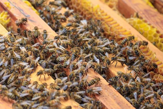 Nahaufnahme von honigbienen auf einem bienenstock unter dem sonnenlicht - landwirtschaftliches konzept