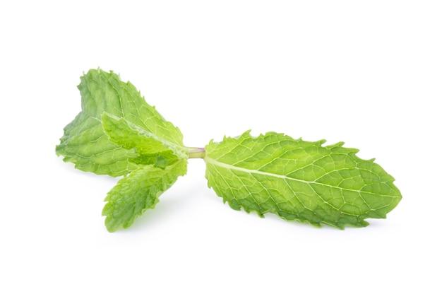 Nahaufnahme von isolierten frischen grünen minzeblättern auf weißem hintergrund. grüne minze oder pfefferminze ist ein kräuter, das zum würzen von eiscreme-bonbonfrüchten verwendet wird, um alkoholische getränke, kaugummi und zahnpasta zu konservieren.