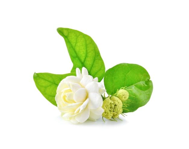 Nahaufnahme von jasminblüten