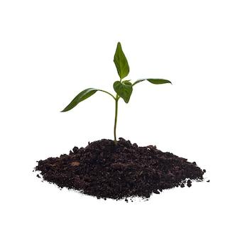 Nahaufnahme von jungen pflanzen sprießen aus haufen erde, isoliert auf weißem hintergrund. wachsendes konzept.