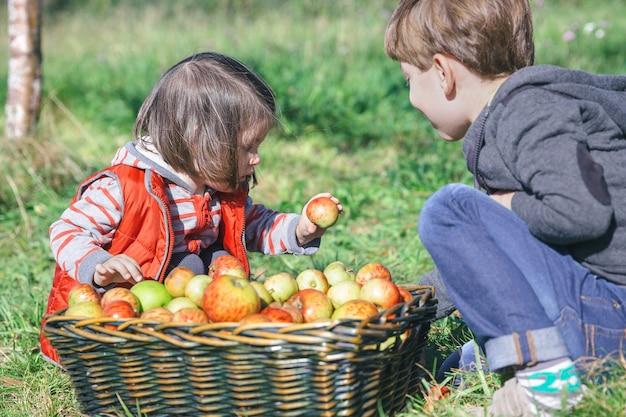 Nahaufnahme von kindern, die frischen bio-apfel aus einem weidenkorb mit obsternte halten. natur- und kindheitskonzept.