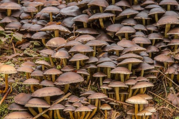 Nahaufnahme von kleinen pilzen auf dem boden in einem wald