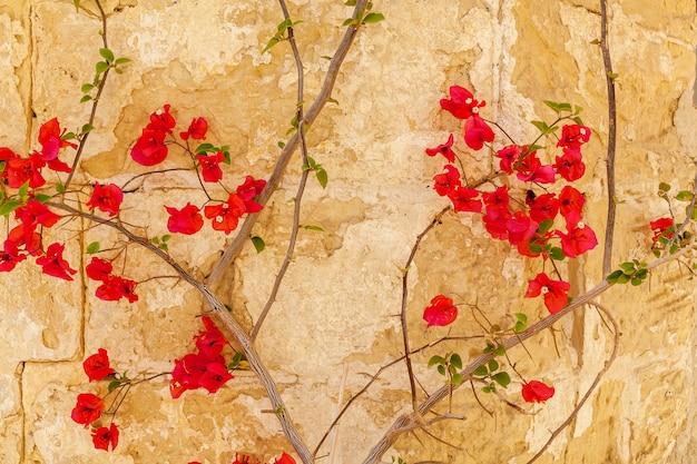 Nahaufnahme von kleinen roten blumen an der alten mauer des gebäudes mit rissen.