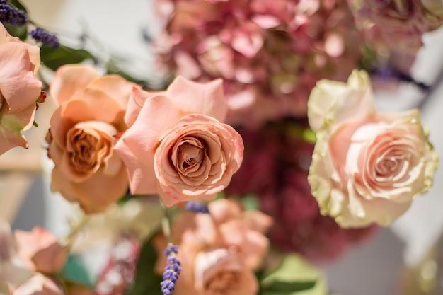 Nahaufnahme von knospen von frischen orange rosen in der sonne strahlt aus