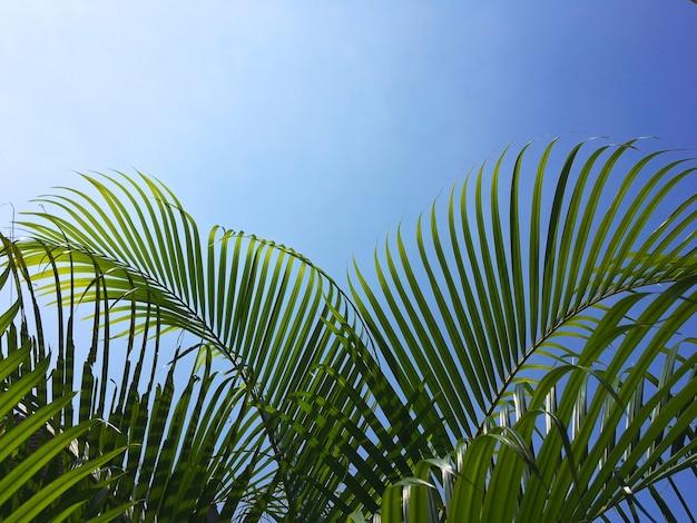 Nahaufnahme von kokospalmenblättern über klarem, blauem himmel am sommerstrand mit kopierraum.