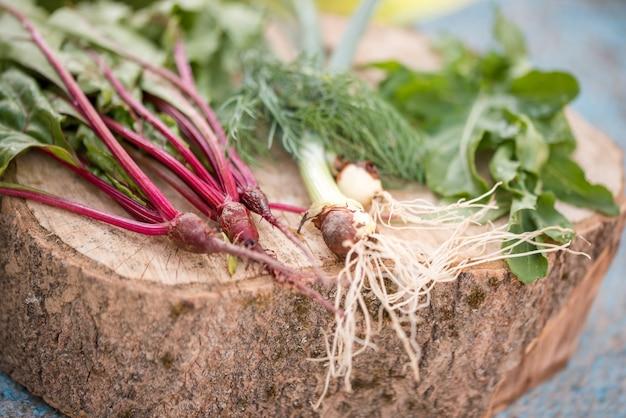 Nahaufnahme von kürzlich geernteten gemüserüben, rote-bete-wurzeln, karotten, rundes mark.