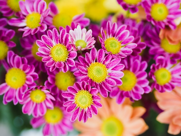 Nahaufnahme von lila blüten