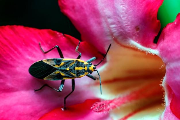 Nahaufnahme von megachilidae auf den blättern, die pollen transportieren