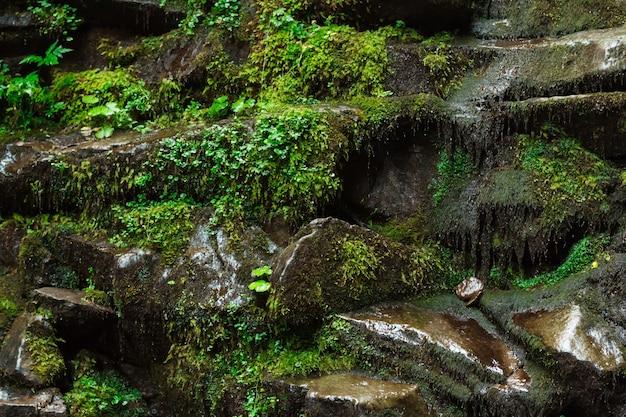 Nahaufnahme von nassen steinen und gras
