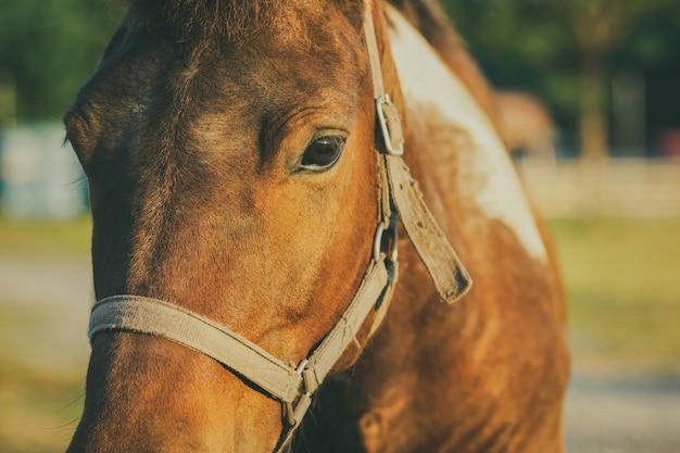Nahaufnahme von pferden stellen im bauernhof und im sonnenschein am abend gegenüber.
