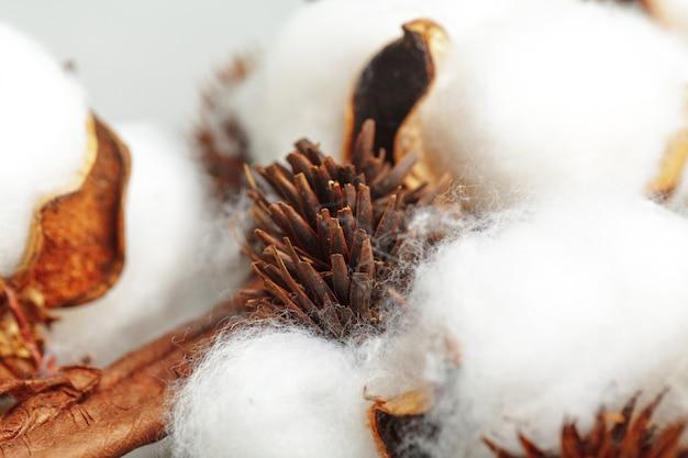 Nahaufnahme von reifen baumwollkapseln auf niederlassung