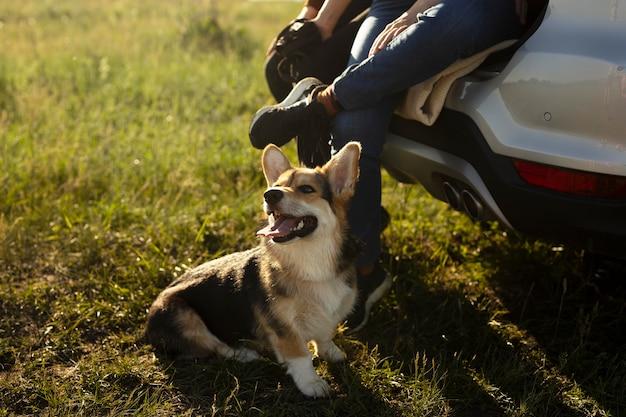 Nahaufnahme von reisenden mit süßem hund Premium Fotos