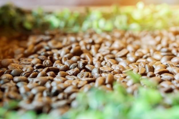 Nahaufnahme von röstkaffeebohnen auf undeutlichen grünen blättern und sonne erweitern hintergrund