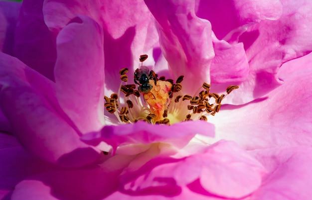 Nahaufnahme von rosa rosenstempeln, ausgewählter fokus, für natürlichen hintergrund