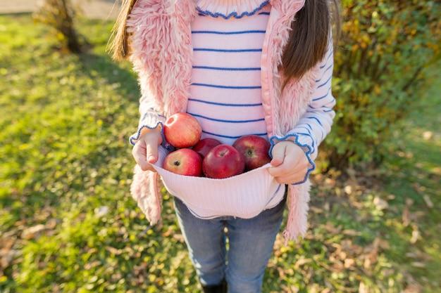 Nahaufnahme von roten äpfeln in den händen des mädchens