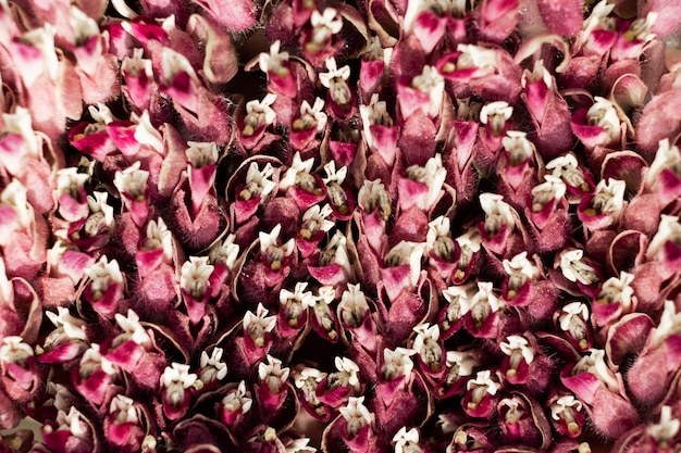 Nahaufnahme von schönen blumendetails in der natur