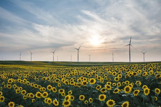 Nahaufnahme von schönen sonnenblumen und windkraftanlagen in einem feld