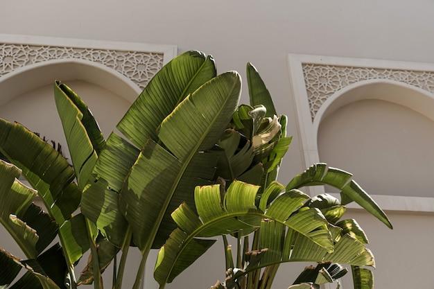 Nahaufnahme von schönen üppigen grünen tropischen palmblättern nahe beige wand.