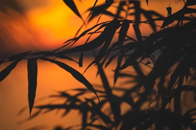 Nahaufnahme von silhouettenbambusblättern mit kopienraum für naturhintergrund