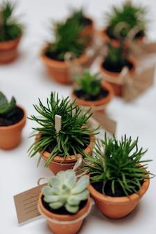 Nahaufnahme von succulents in den töpfen