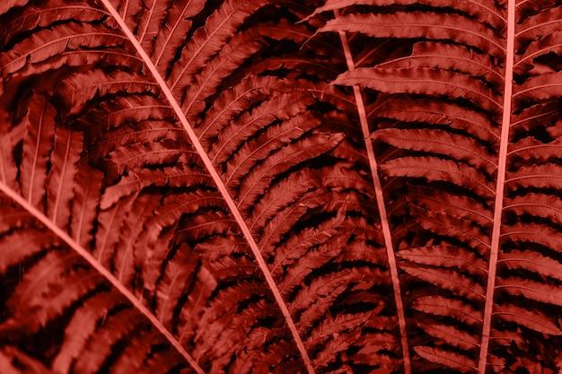 Nahaufnahme von tropischen anlagen in lebender korallenroter farbe