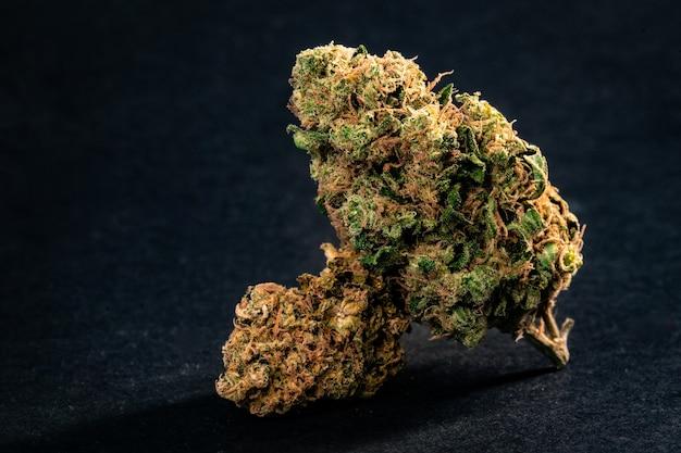 Nahaufnahme von verschreibungspflichtigen medizinischen marihuana-blütenknospen in schwarzem hintergrund