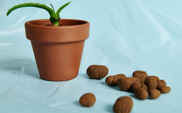 Nahaufnahme von verstreutem blähton, entwässerung für pflanzen neben einem tontopf mit aloe-pflanze