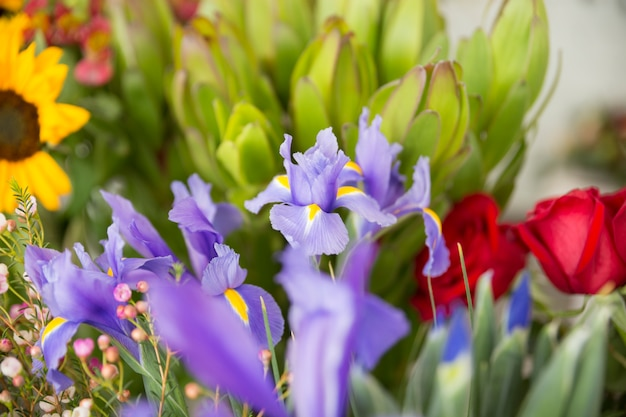 Nahaufnahme von violetten irisblumen